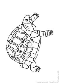 Green sea turtle colouring page