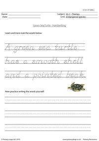 Green sea turtle handwriting