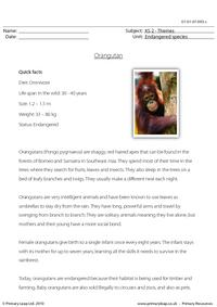 Orangutan comprehension