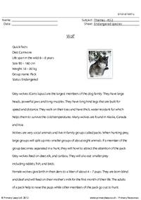 Reading comprehension - Wolf