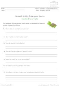 Research Activity - Hawksbill Sea Turtles