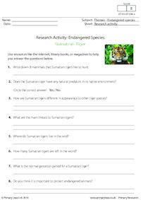 Research Activity - Sumatran Tiger