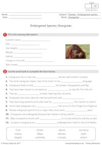 Endangered Species - Orangutan