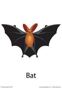 Halloween flashcard - bat