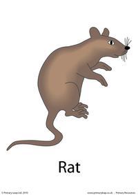 Halloween flashcard - rat