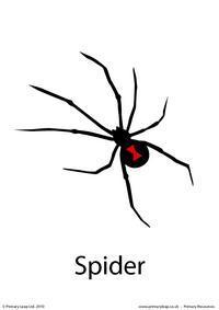 Halloween flashcard - spider