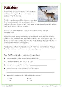 Reading comprehension - Reindeer