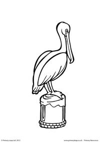 Pelican - Colouring page
