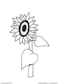 Sunflower - Colouring page