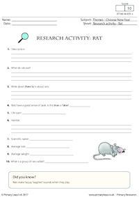 Research Activity - Rat