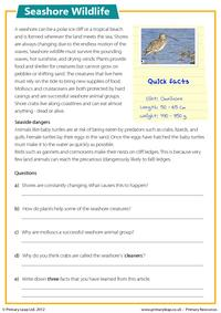 Reading comprehension - Seashore wildlife