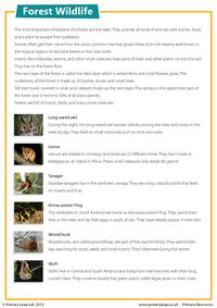 Forest wildlife - Comprehension