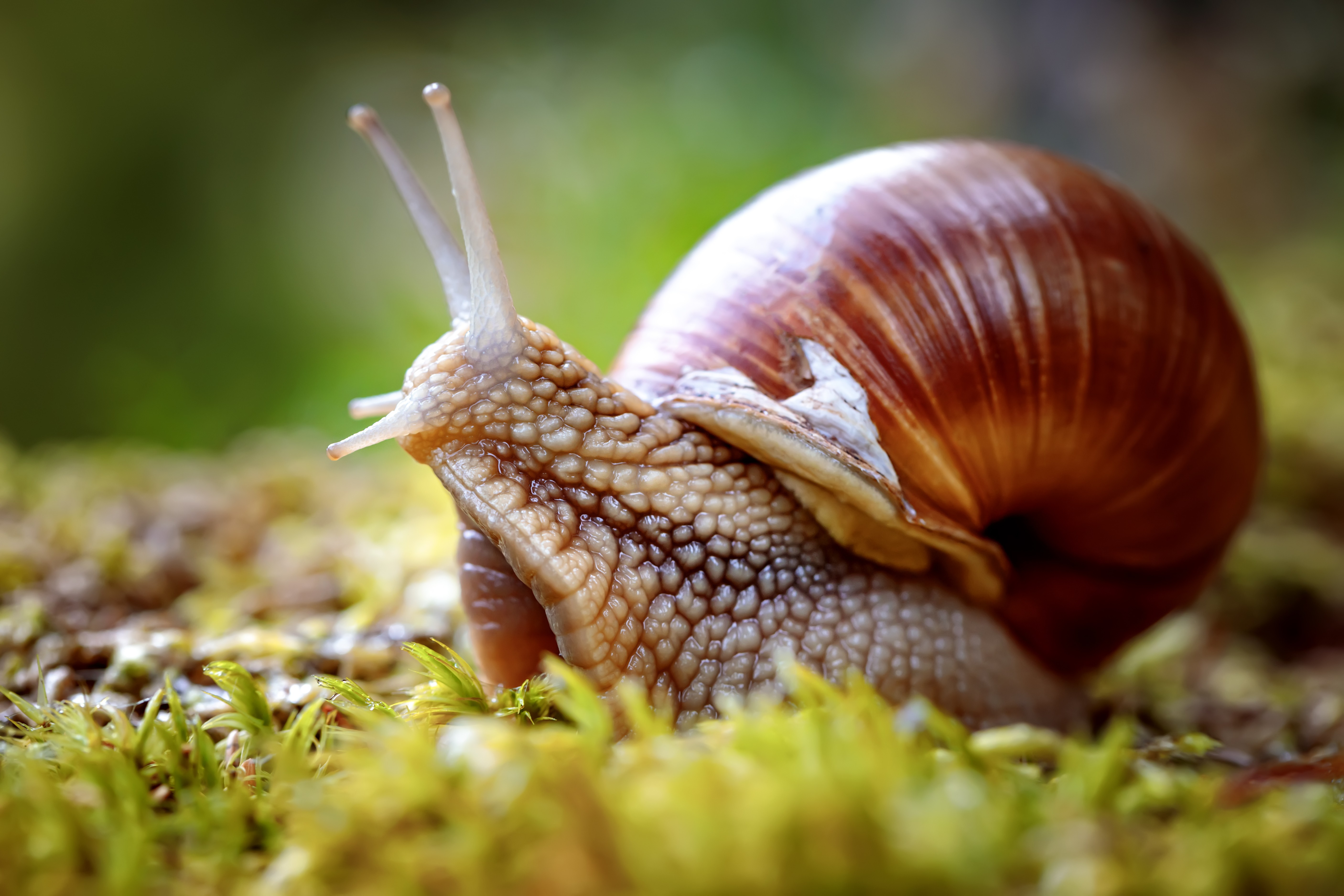 Biology: All About Molluscs: Level 1 activity for kids ...